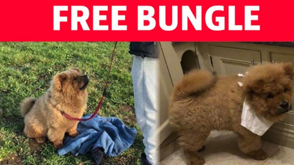 free-bungle