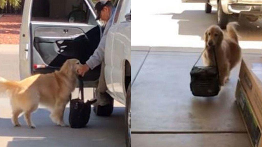 perro-servicial