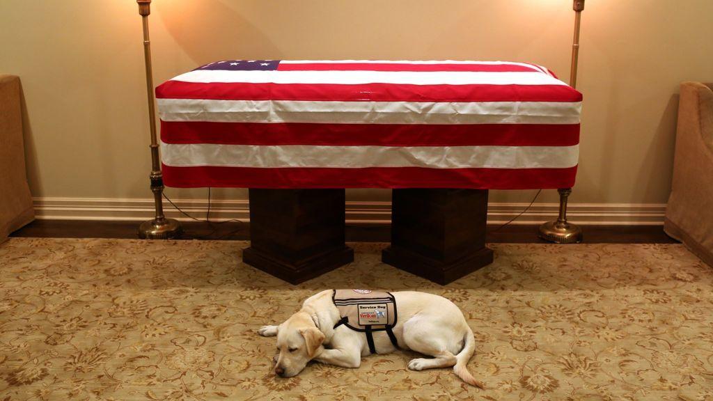 La conmovedora imagen del perro de George Bush en el último adiós a su dueño