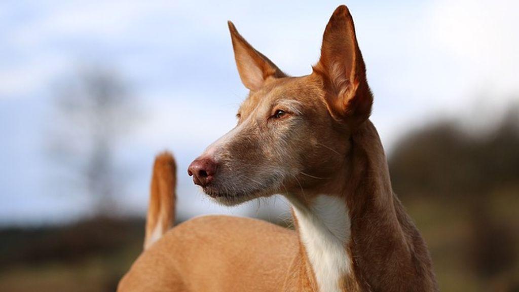 Descienden más de 80 metros por una pared para salvar a dos perros en Jaén
