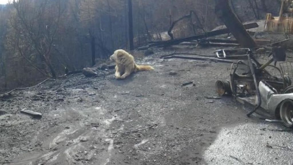 Un perro espera a sus dueños durante un mes en la casa devastada por los incendios de California