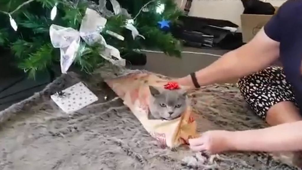 Un gato deja que su dueña lo empaquete como regalo de Navidad