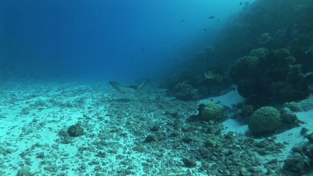 Hallan una inmensa vida profunda bajo el fondo marino