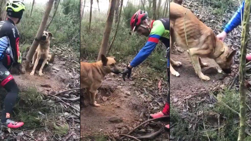 Un grupo de ciclistas salva a un perro abandonad y atado a un árbol en una carretera próxima a Oporto