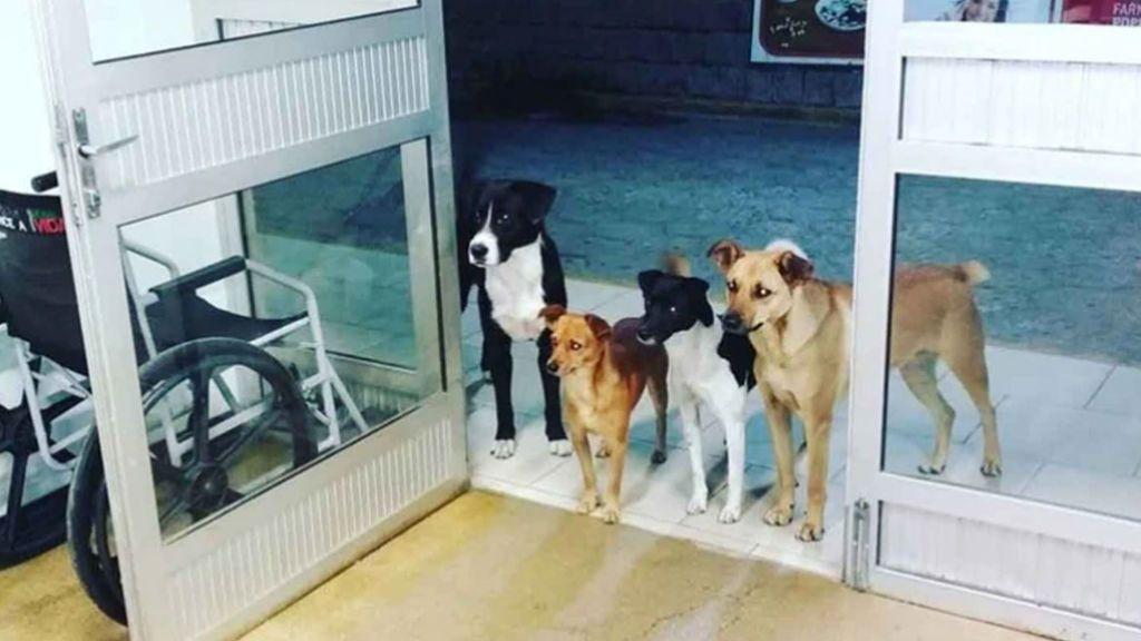 Entrañable escena de amor: Cuatro perros esperan a su dueño a las puertas de un hospital donde iba a ser operado