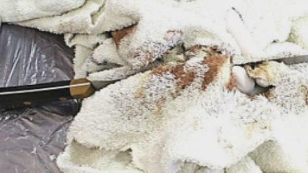 Guardia Civil analiza huellas y ADN del cuchillo de 30 cm por orden de la juez de Almonte