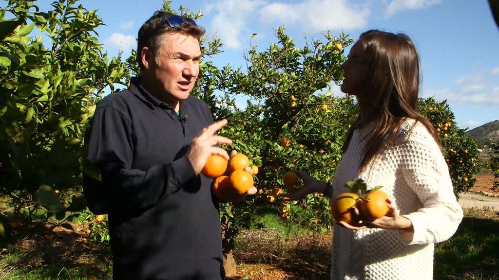 Los bares, principales 'culpables' de que el precio del zumo de naranja se dispare