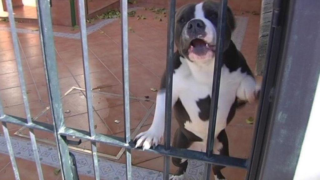 Un okupa aterroriza a los vecinos con dos perros peligrosos