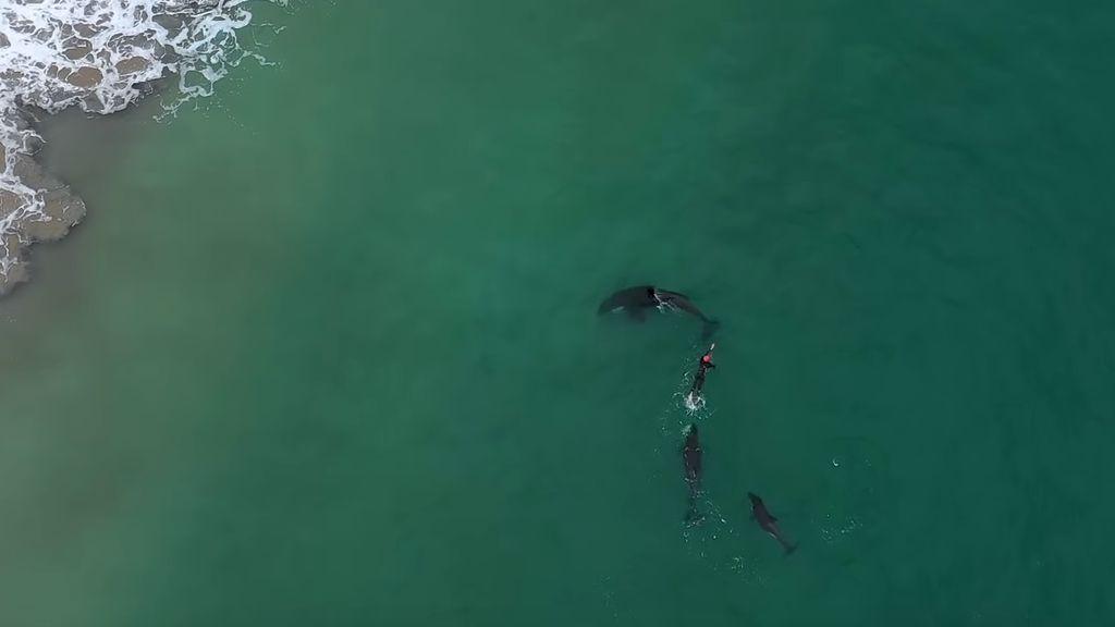 Una mujer de 60 años nada rodeada de orcas, las ballenas asesinas, en Nueva Zelanda