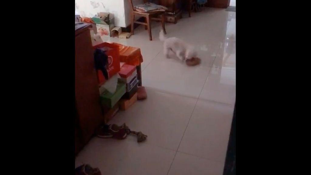 El divertido momento en el que un perro es pillado 'in fraganti' haciendo travesuras