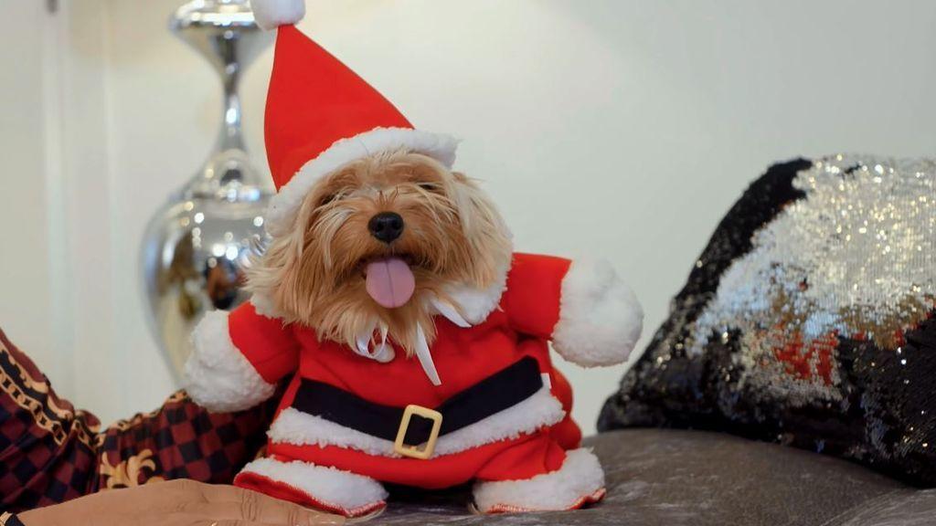 Toby se convierte en el Papá Noel 'canino'