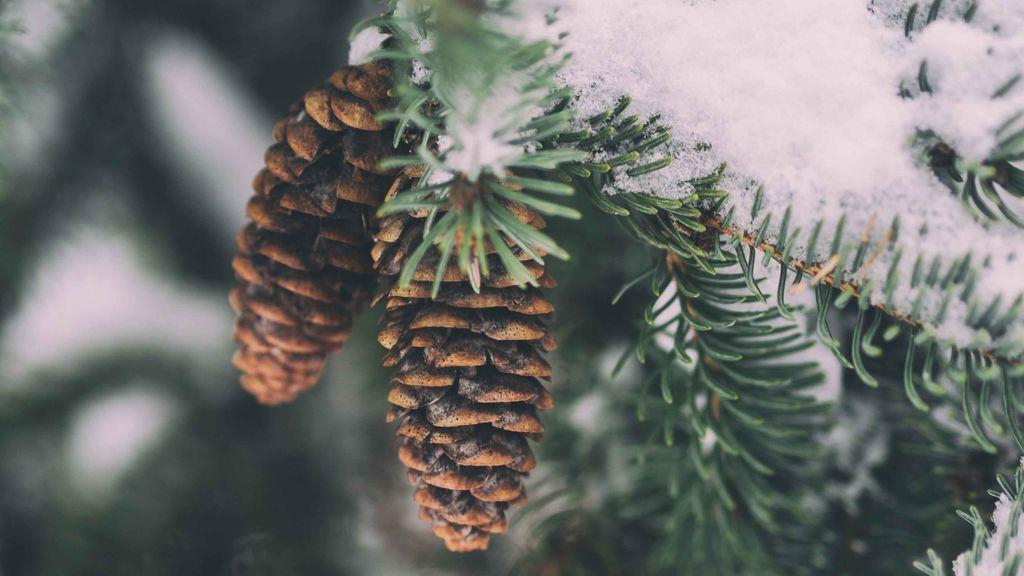 Sol, pero sin confiarse: el tiempo que te espera la última semana de diciembre