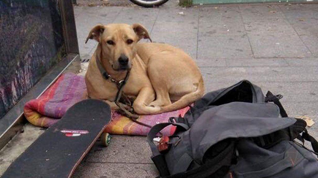 Cinco detenidos por las protestas por la muerte de la perra 'Sota'