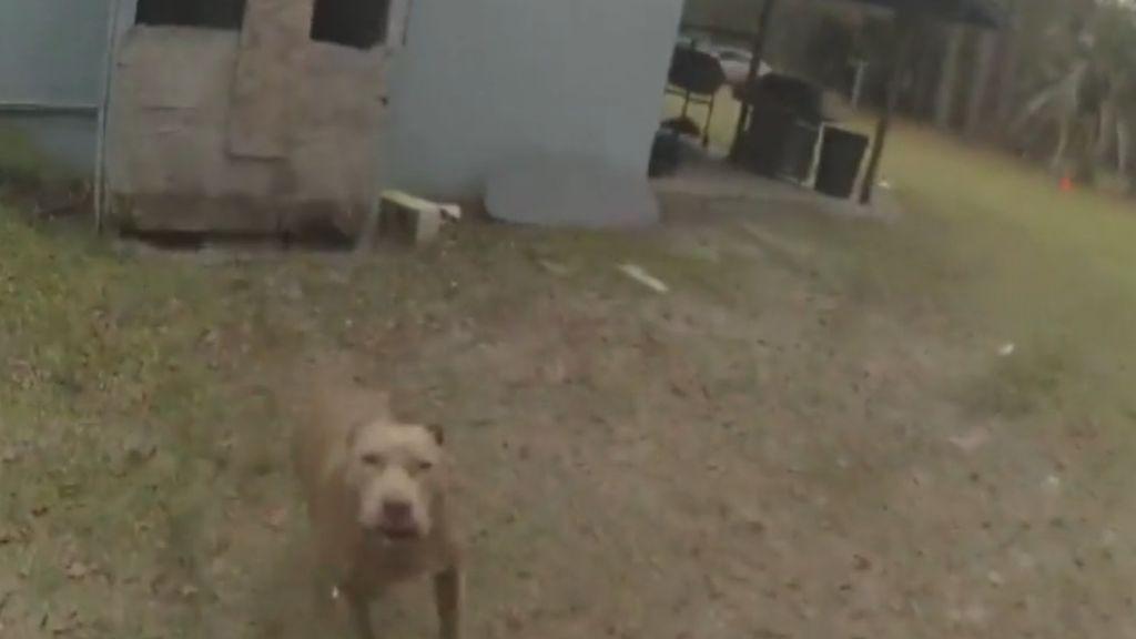 Mata a un Pitbull que empezó a perseguirle