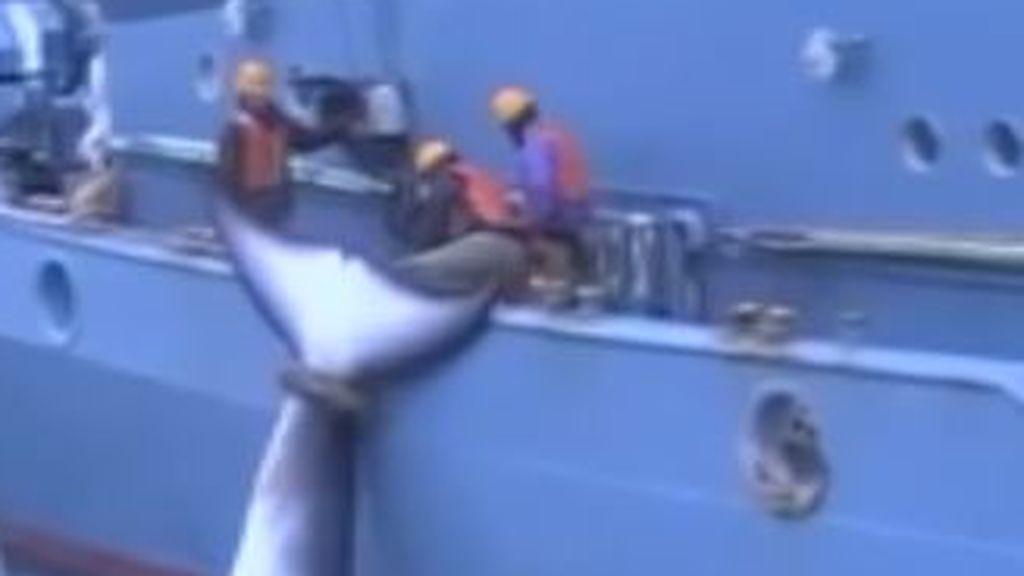Japón vuelve a cazar ballenas
