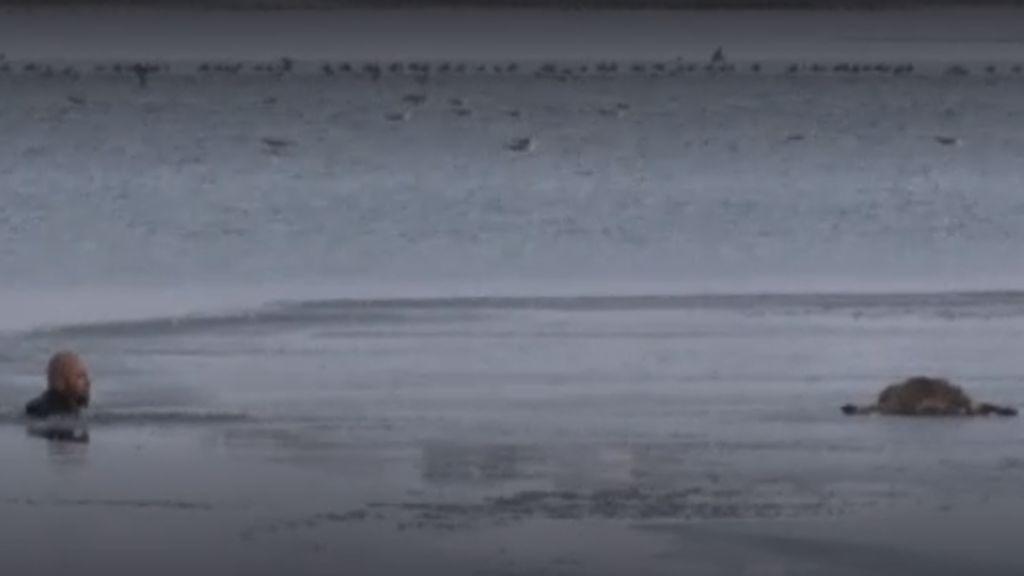 Espectacular rescate de un perro en un lago helado en Turquía