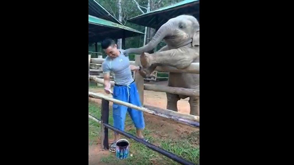 La tierna relación entre un elefante y su cuidador que ha emocionado en las redes