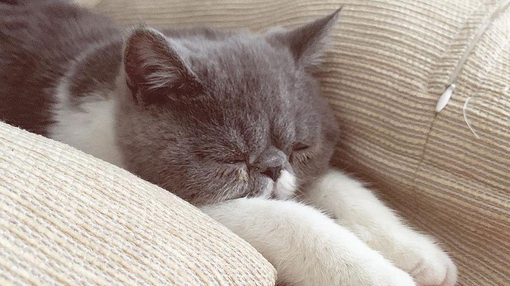 Chambi, un gato de élite: la mascota de Jaime Lorente es toda una estrella