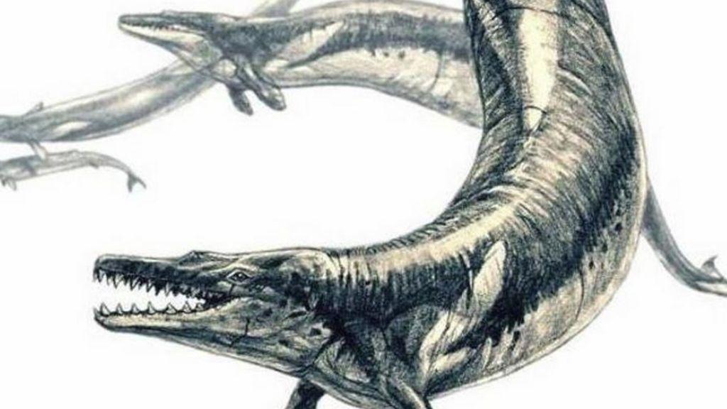 Así era el e 'Basilosaurus isis', el depredador que devoraba ballenas y peces