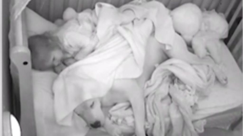 Una niña duerme tranquila y segura abrazada a su pitbull de 45 kilos