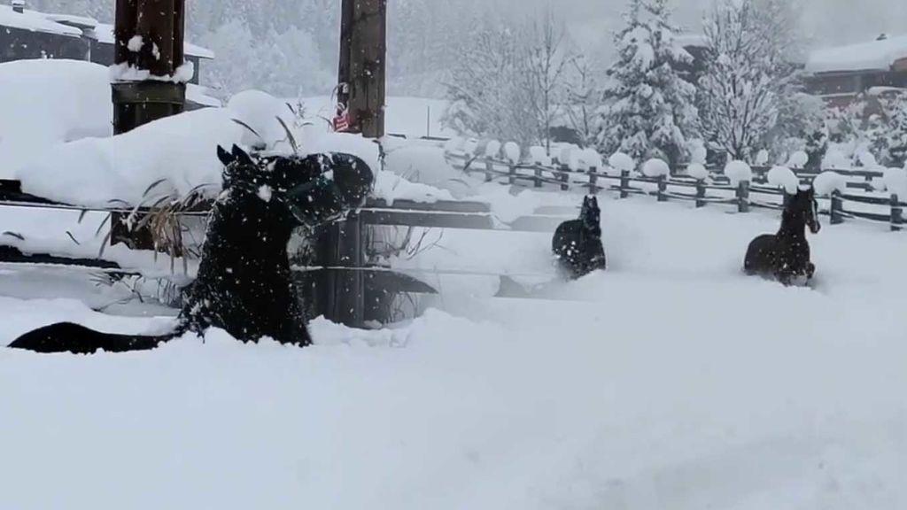 El vídeo de los caballos pasándoselo pipa con las nevadas en Europa