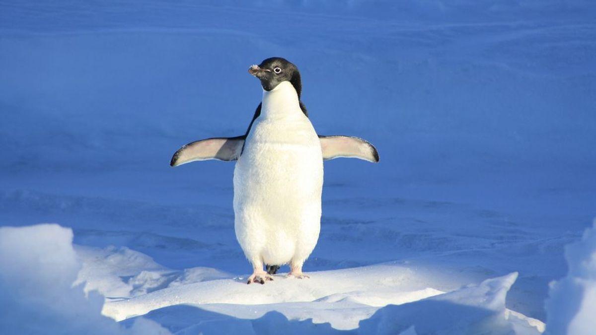 Patinar con pingüinos en Londres