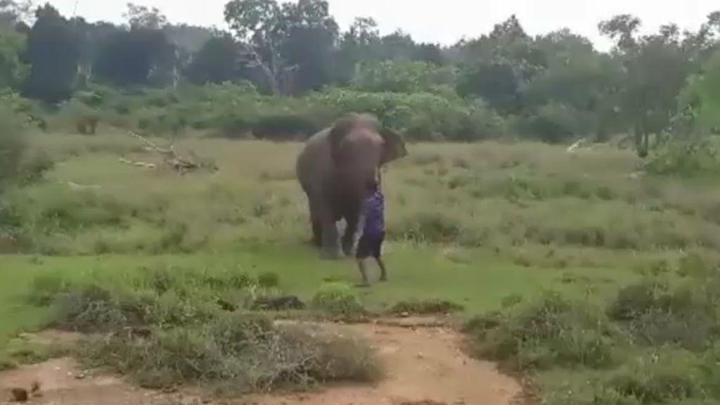 Un guía turístico muere tras ser pisoteado por un elefante cuando trataba de hipnotizarlo