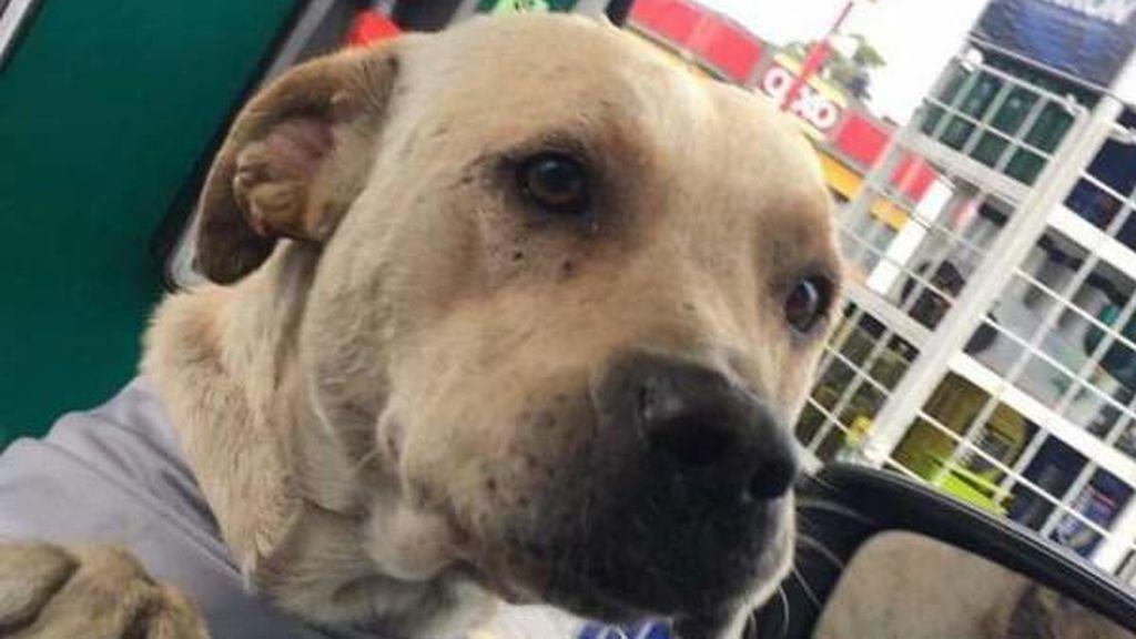 El dueño de una gasolinera adopta a un perro callejero y éste le ...