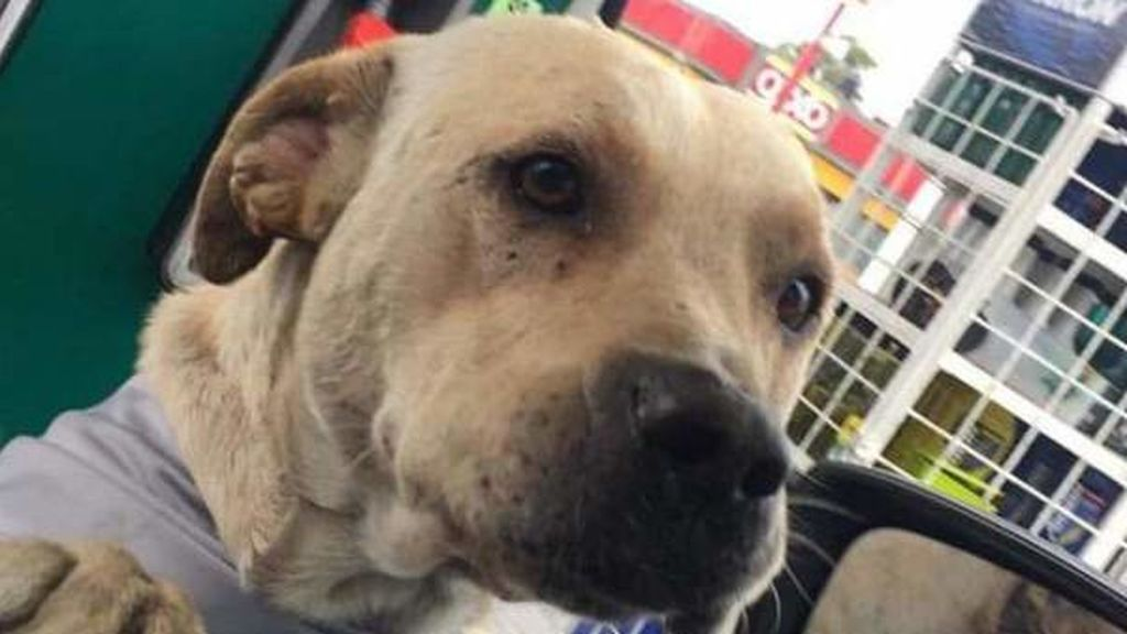 Un perro protege al dueño de una gasolinera frente a tres asaltantes