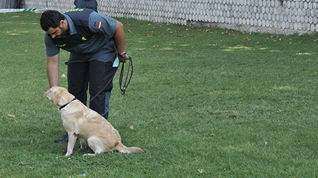 Los perros, 'investigadores' indispensables para resolver casos como el de Laura Luelmo y Romina Celeste