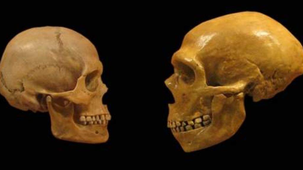 Un homínido extinto podría explicar la historia de la humanidad