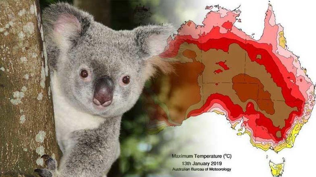 Hasta 50 ºC en Australia: la ola de calor es la más larga desde 2011