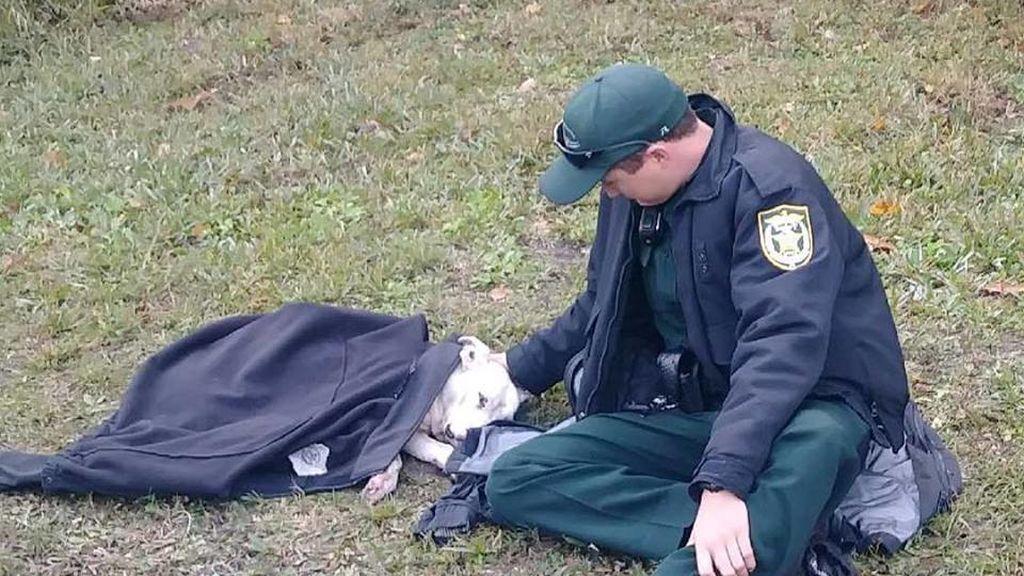 Un policía conquista a la Red tras auxiliar a un perro atropellado