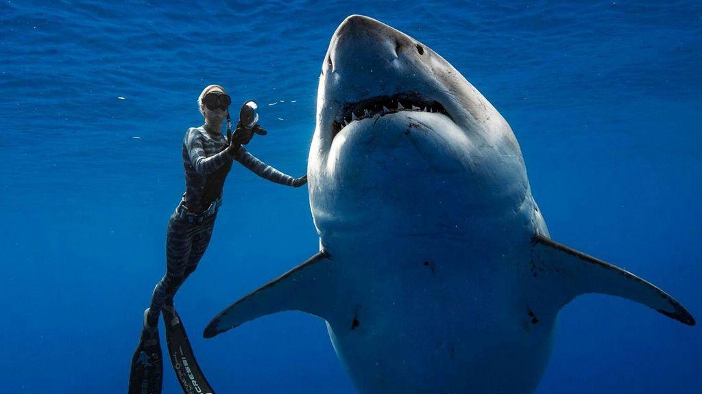El momento sobrecogedor en que un buzo toca a Deep Blue, el tiburón blanco más grande que se ha filmado jamás