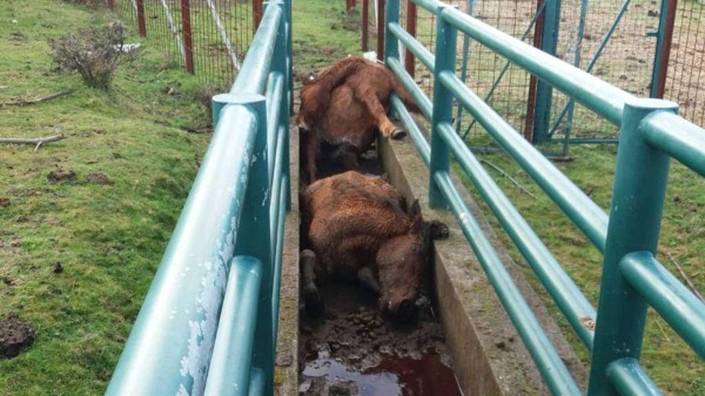 Abren una investigación por la muerte a golpes de cuatro caballos en Pontevedra