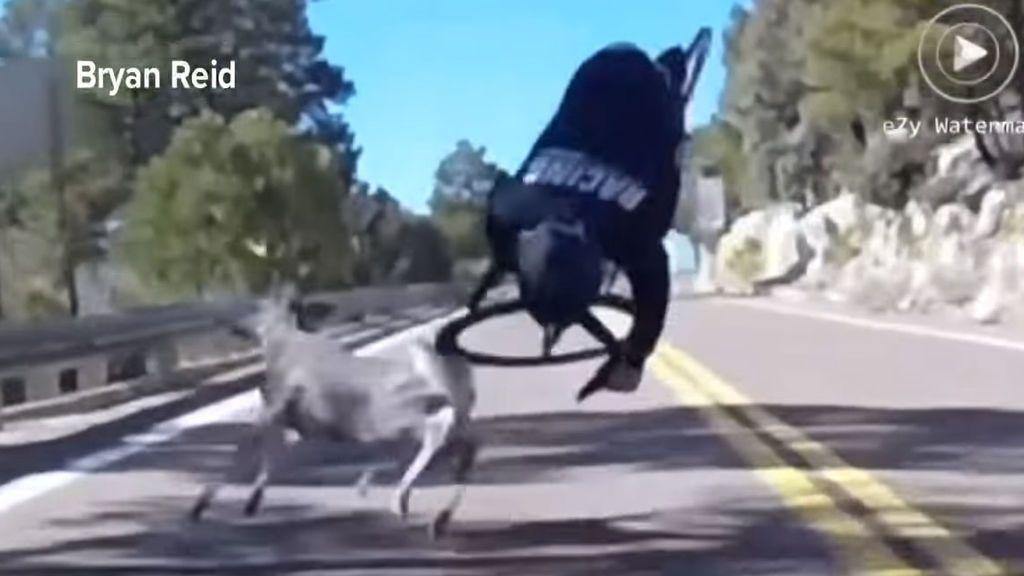 El brutal choque de un ciclista contra un ciervo en pleno descenso de montaña