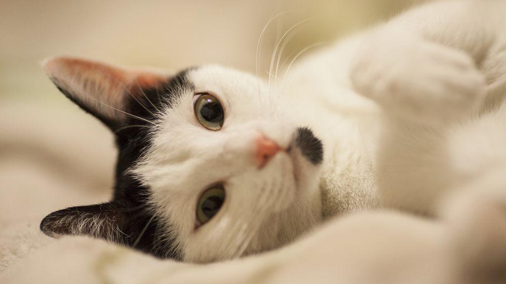 La historia del gato un poco tontico al que emparedaron sin querer en una reforma casera
