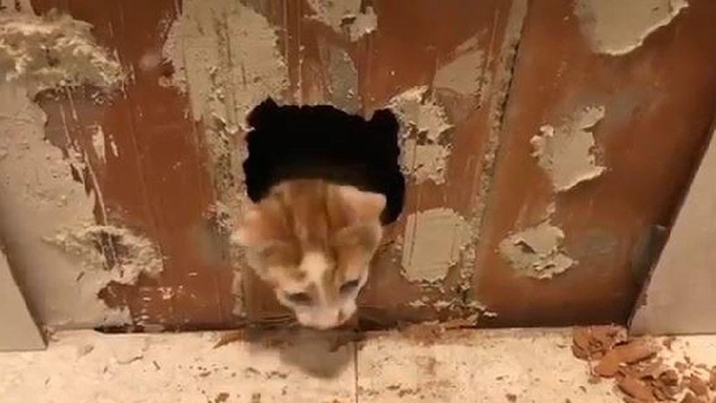 La historia de Bingo, el gato emparedado que se ha hecho viral