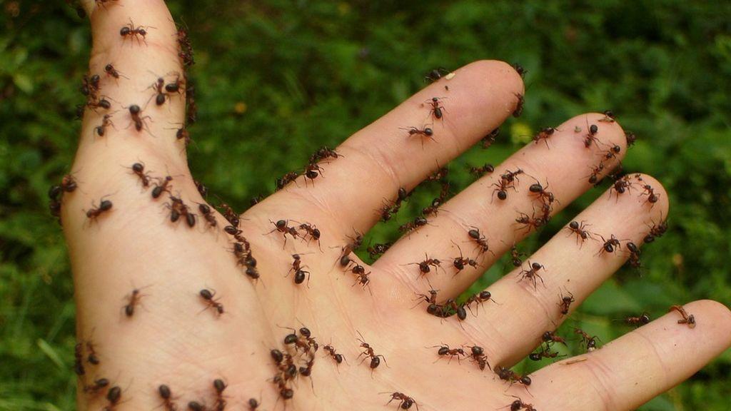 ants-4239_960_720