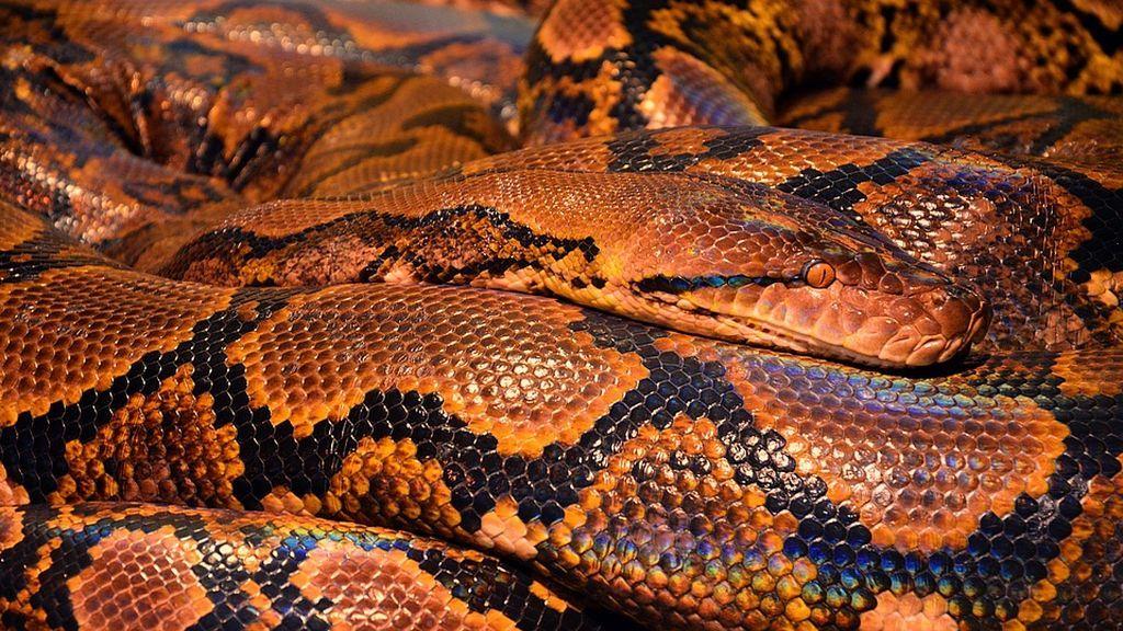 Una mujer se sienta en el baño y le ataca una serpiente en Australia