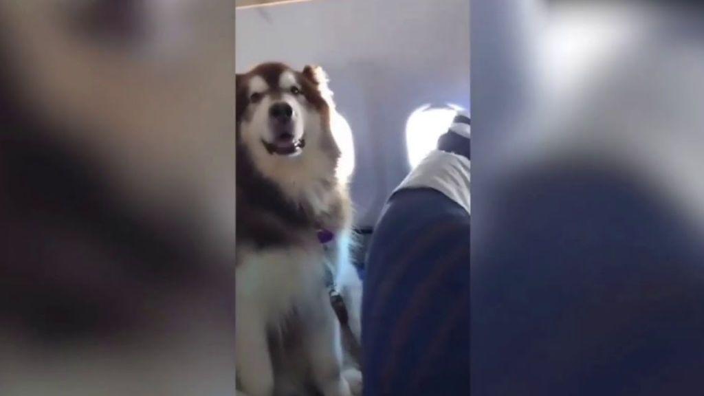 Un pasajero perruno revoluciona a los pasajeros de un vuelo