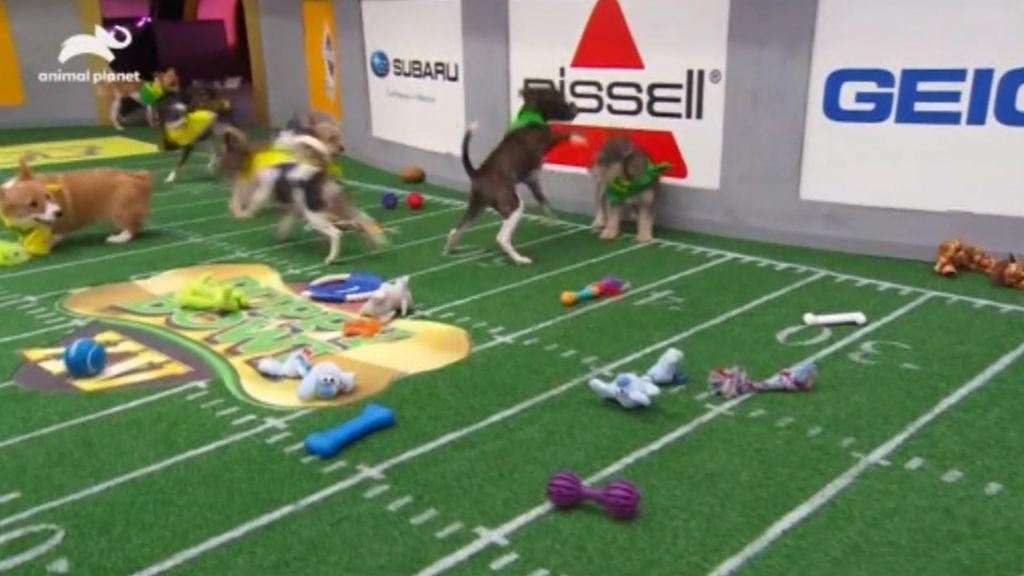 La adorable Super Bowl perruna para promover la adopción