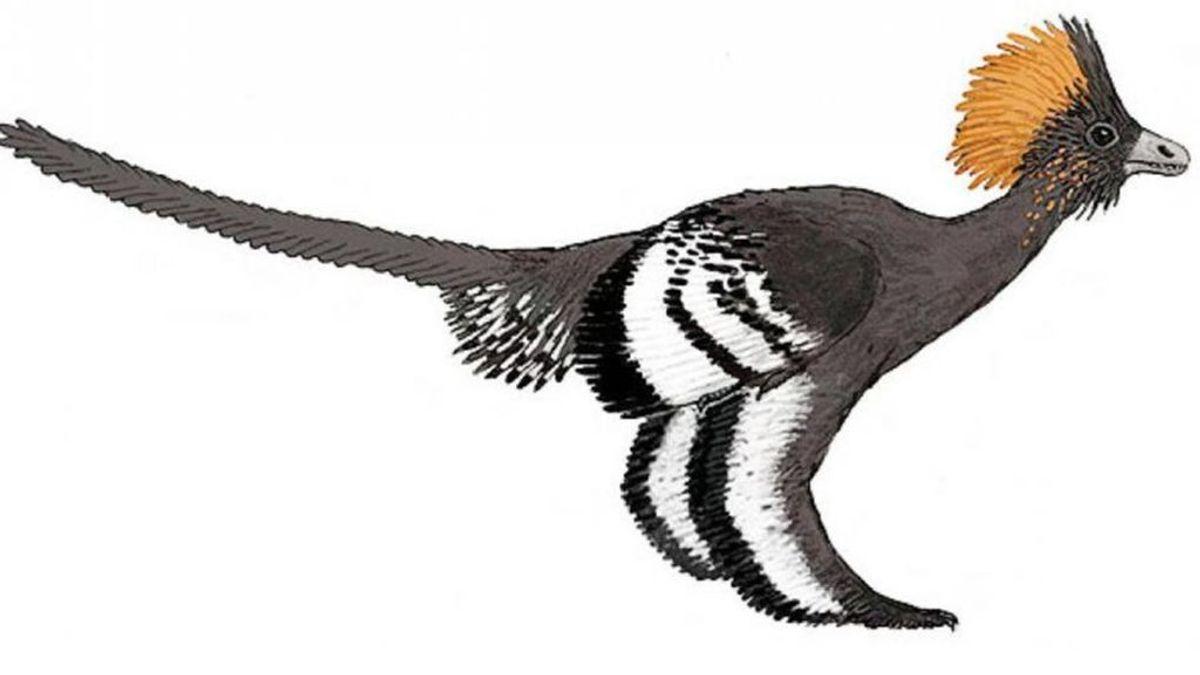 ¿Cuando empezaron los pájaros a volar? El análisis de un fósil de dinosaurio lo revela