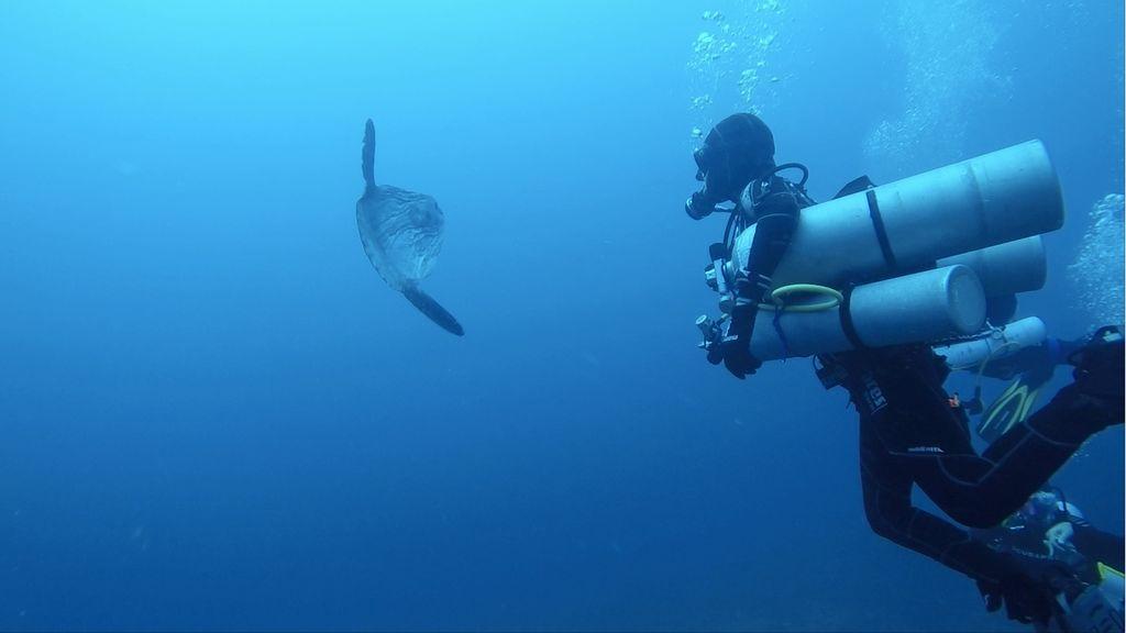 La profundidad y el buceo