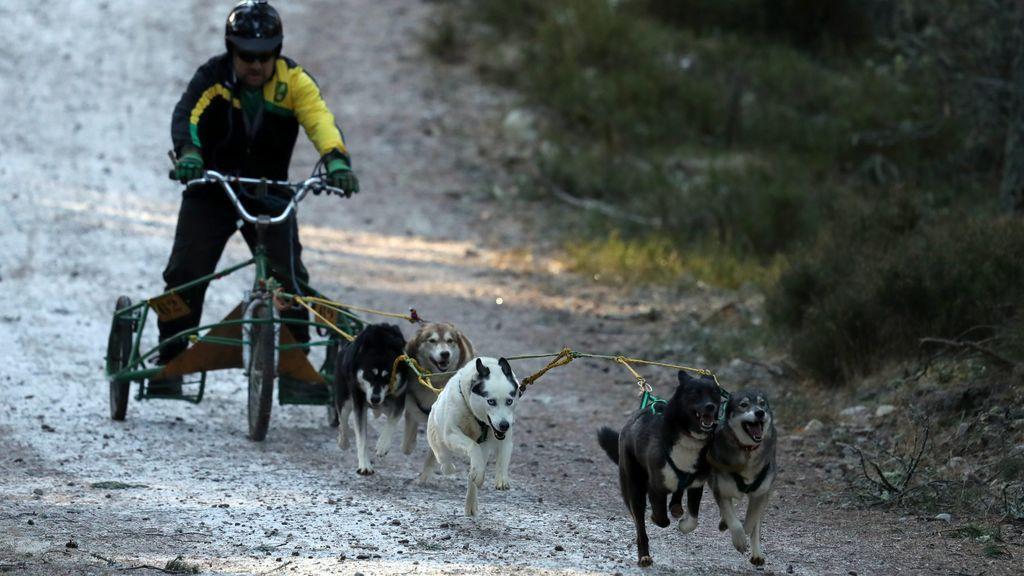 Cinco deportes que puedes practicar con tu perro y ni siquiera sabes que existen