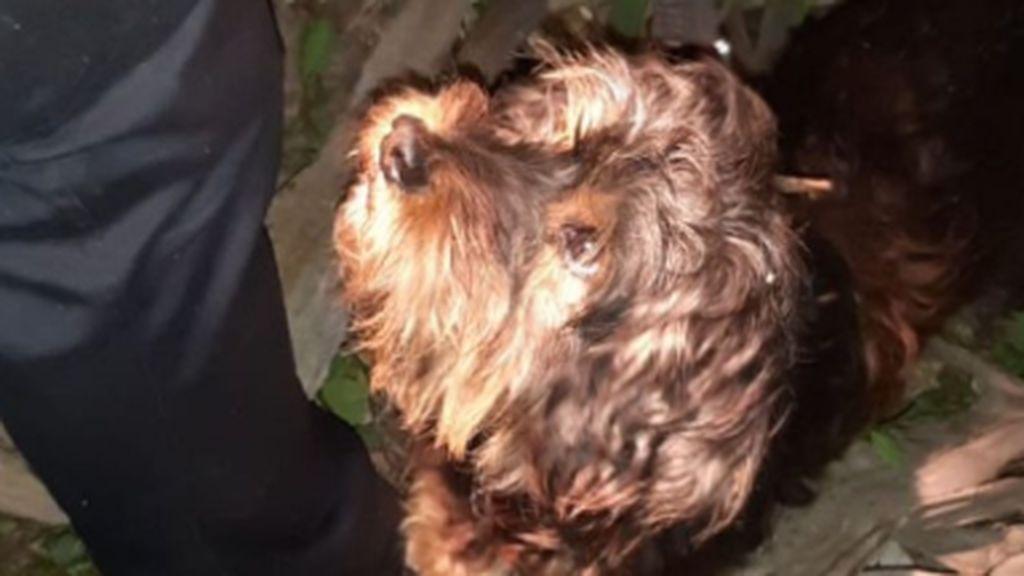 Un perro pasa siete horas ladrando hasta que rescatan a su dueño de un barranco