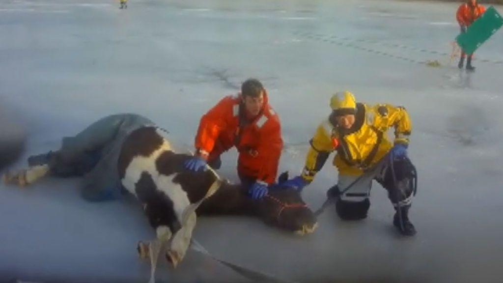 Consiguen rescatar de un lago helado un caballo que había quedado atrapado