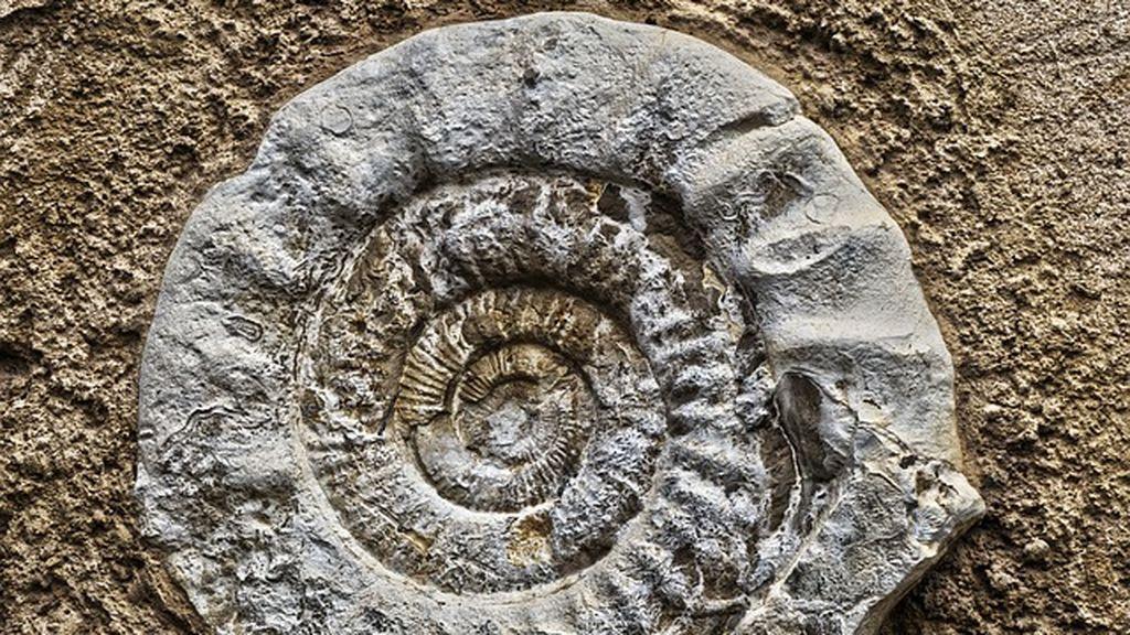 Creía que se trataba de una bala de cañón y, al abrirla, descubre el fósil de una criatura de 185 millones de años