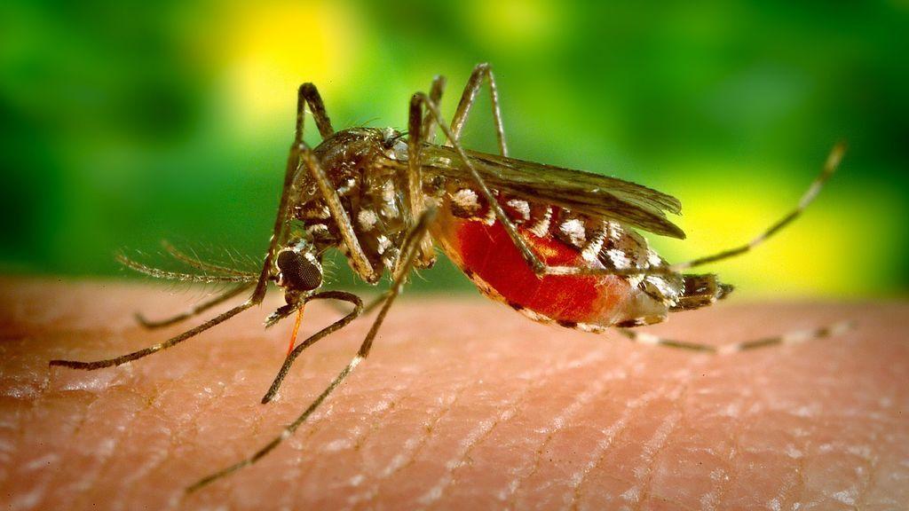 Científicos podrían haber descubierto cómo controlar la sed de sangre de los mosquitos