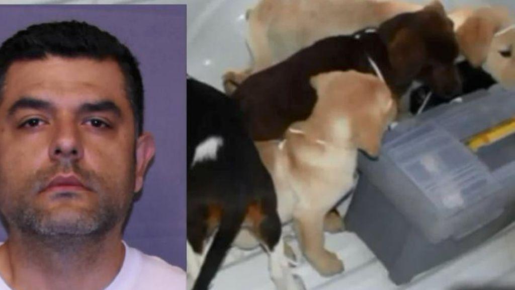 6 años de prisión para un veterinario que usaba perros para traficar con droga en Colombia